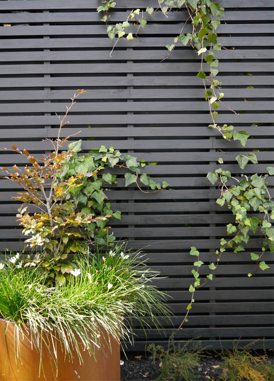 The planters also support climbing plants that are growing up timber screens.