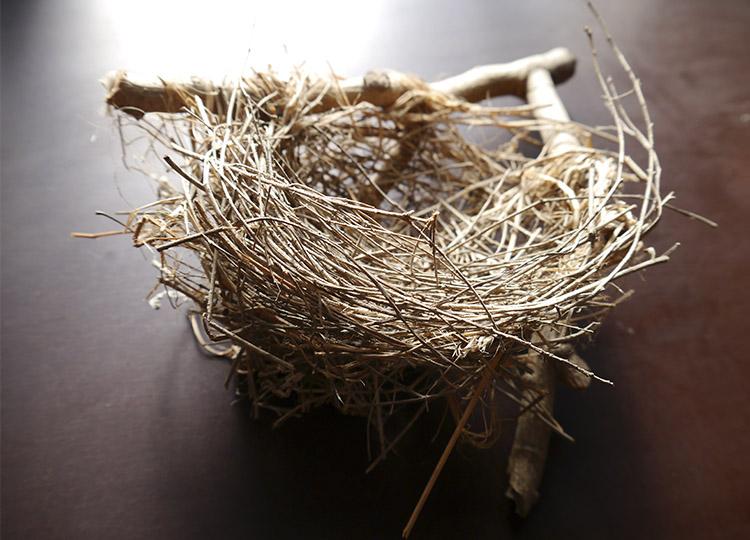 Landscapology_Nest2.jpg