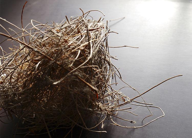 Landscapology_Nest7.jpg