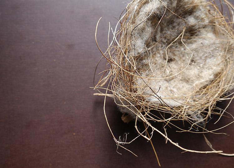 Landscapology_Nest9.jpg