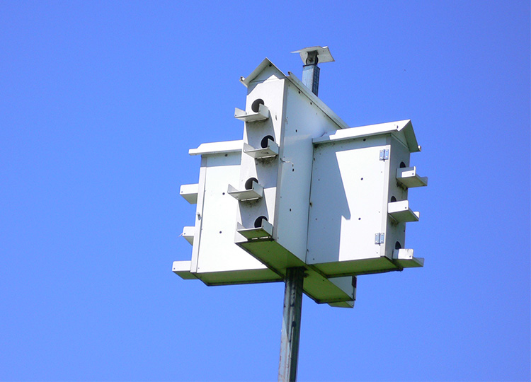 30. Nest Boxes for Rare Martins