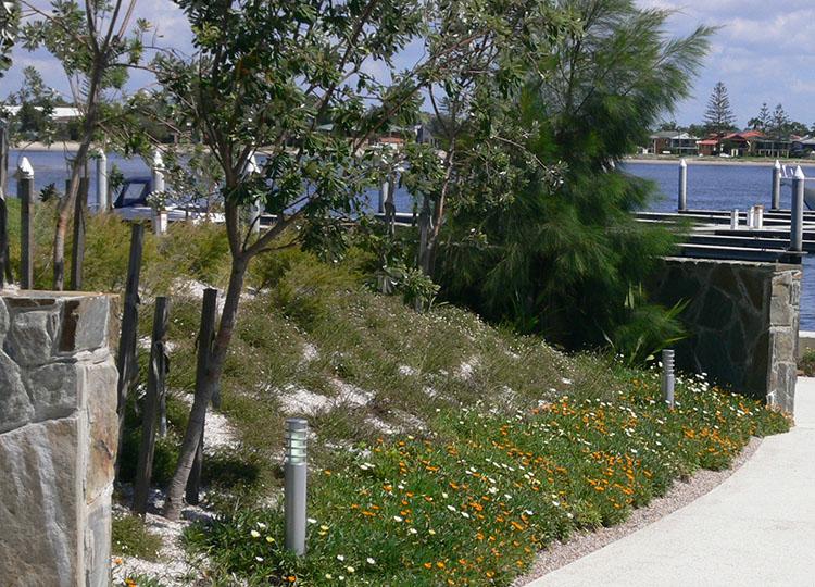 Coastal planting at the Gold Coast.