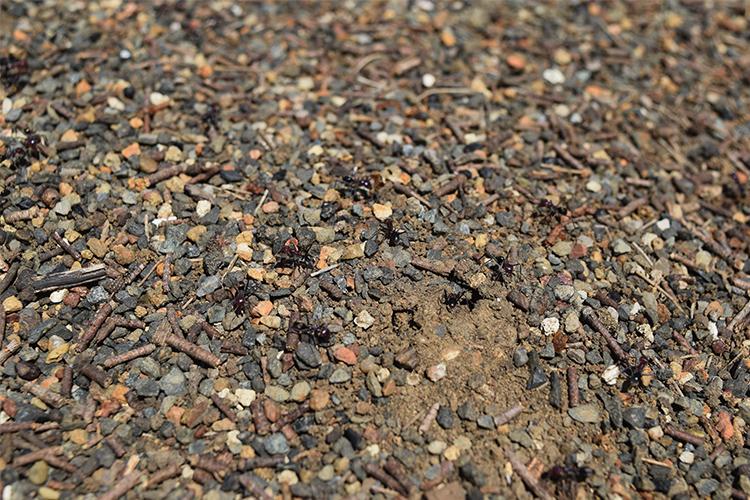 Landscapology_November20.jpg