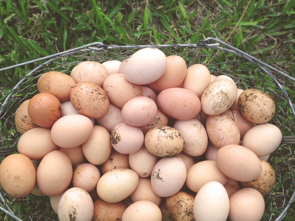 Fresh eggs. Stinky and warm.