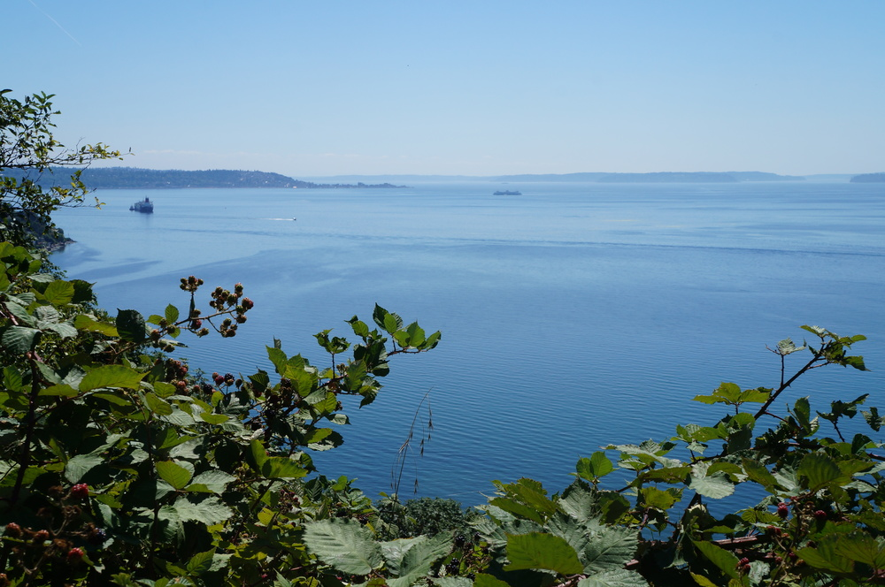 Lovely Puget Sound.  Not so lovely Himalayan blackberry /  Rubus armeniacus .