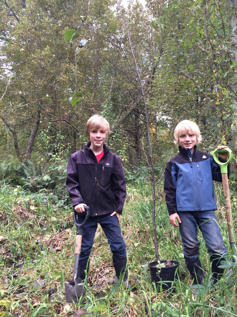 They we excited to field-plant the tall alder sapling they had potted-up in the nursery the previous spring.