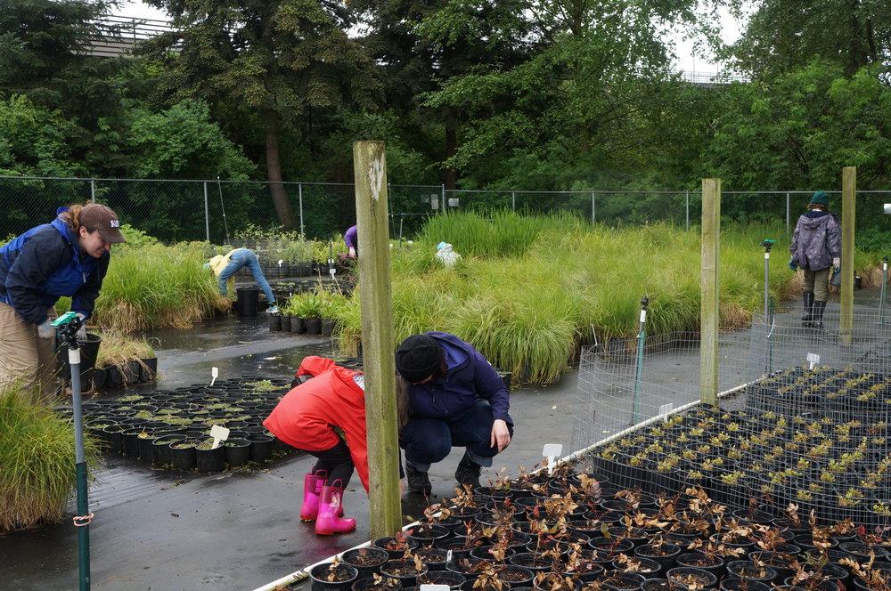 wetland plant nursery homeschool squad