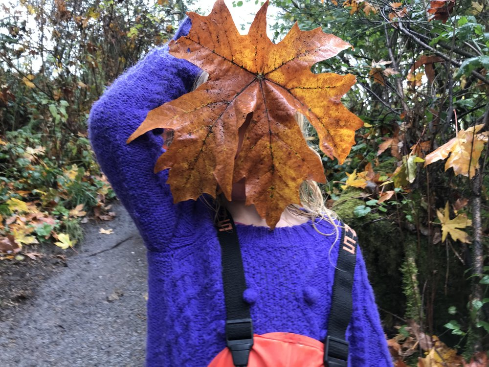 Big leaf maple / Acer macrophyllum