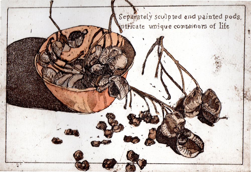 15. Helen Clarke,  Seeds and Pods , hand coloured etching, $240