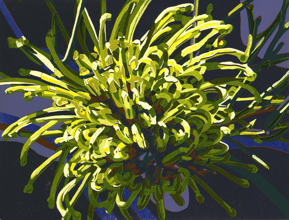 25. Helen Clarke,  Hakea lorea - Desert Flower , reduction linocut, $450