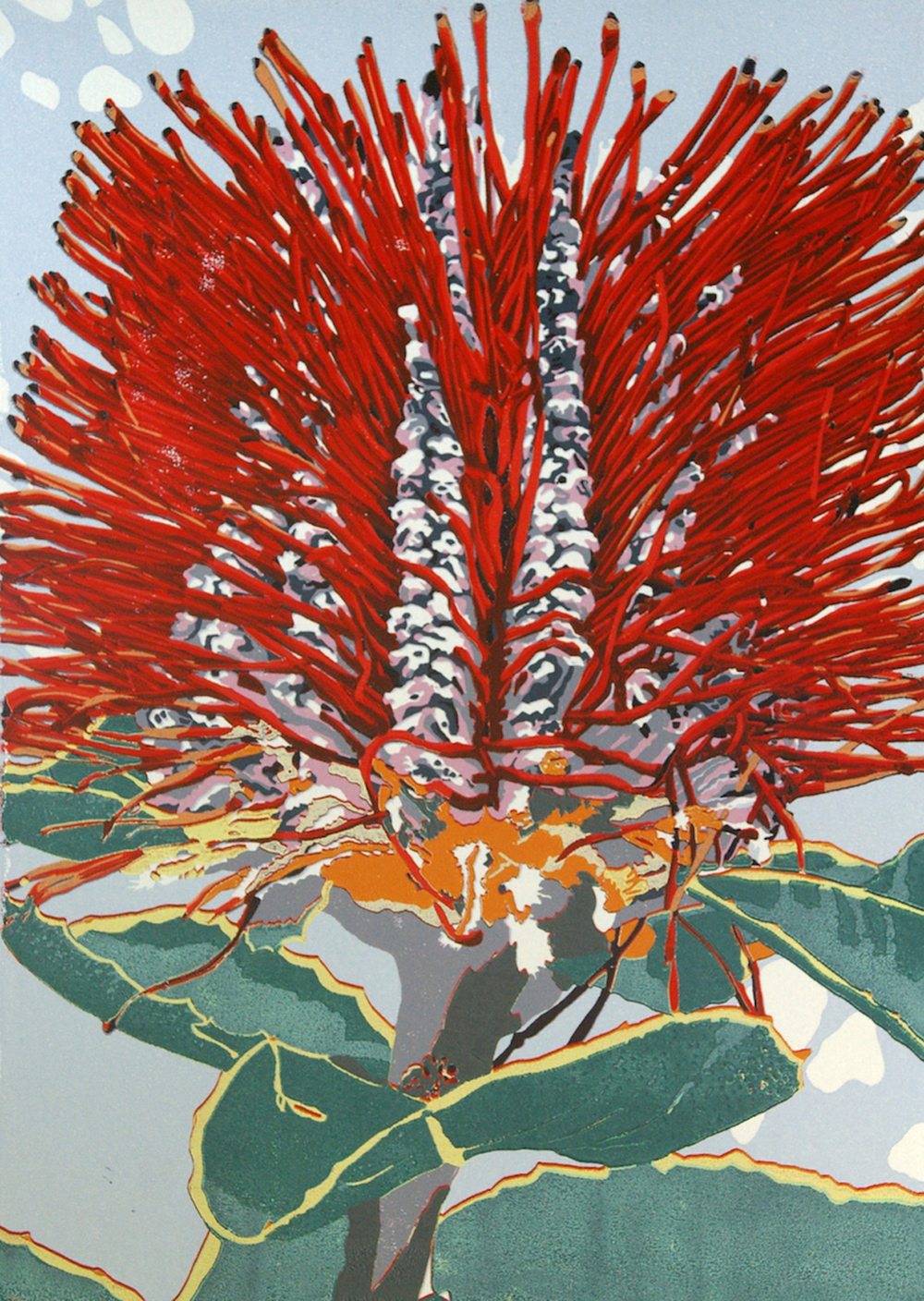 27. Helen Clarke,  B. coccinea , reduction linocut, $970