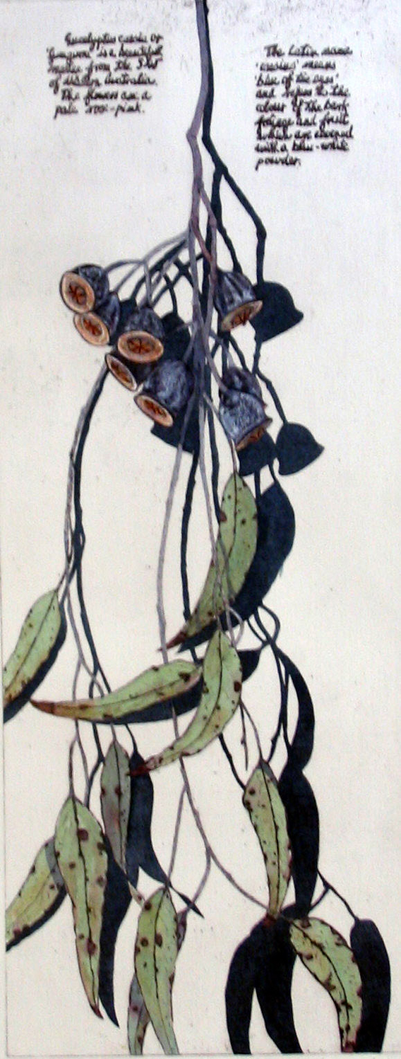 32. Helen Clarke,  Eucalyptus Caesia , hand coloured etching, $490