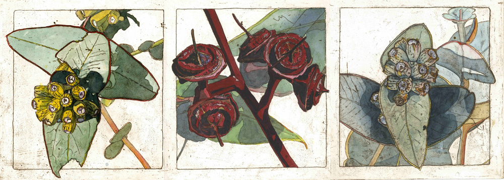 33. Helen Clarke,  Dryland Mallee , hand coloured etching, $580