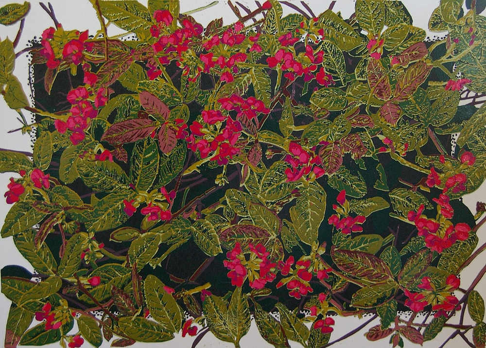 36. Helen Clarke,  Kennedia coccinea , reduction linocut, $970
