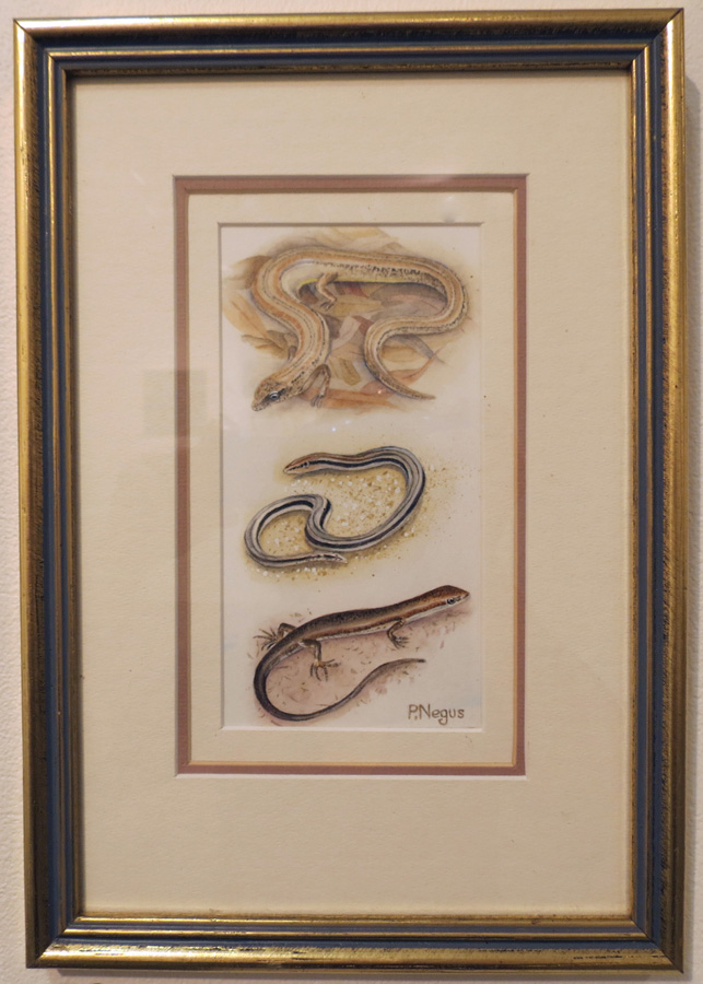 70.  Two Skinks and a Lerista  by Patricia Negus, watercolour, $250