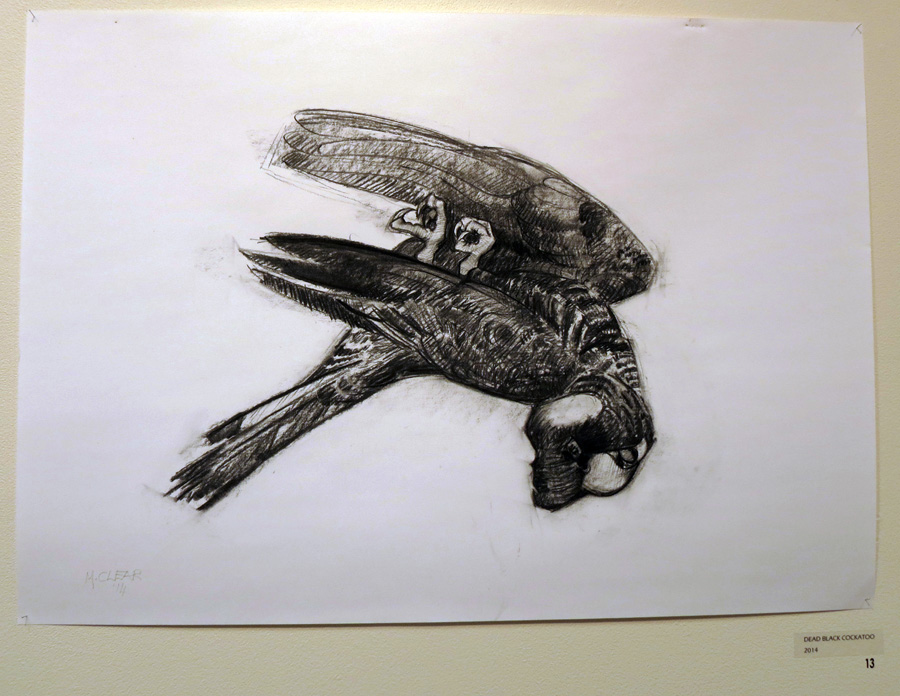 13. Madeleine Clear,  Dead Black Cockatoo , charcoal on paper (unframed), 2014 $660