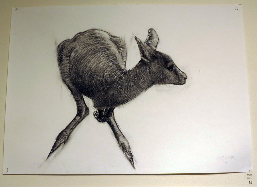 16. Madeleine Clear,  Hopi , charcoal on paper (unframed), 2011, $660