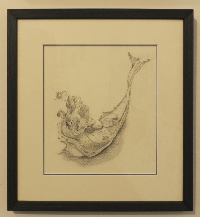 8. 'Meditation on the Withered', Caroline Lyttle, lead pencil, $430