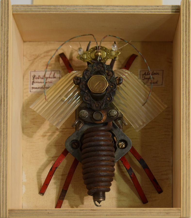 41. Alastair Taylor, 'Specimen', found objects