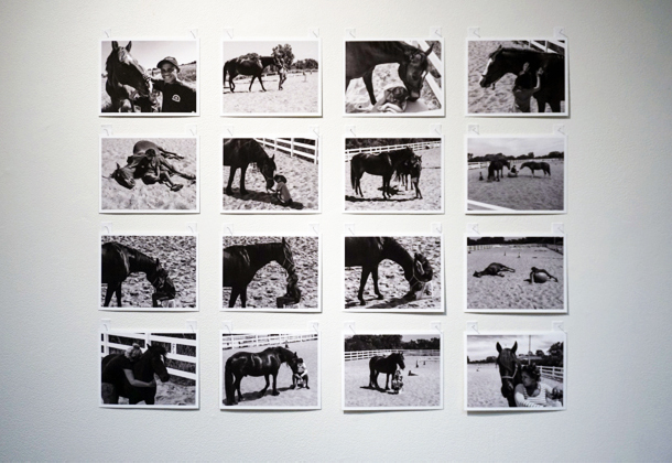 7. Matt McVeigh,  A Horse on Course,  in collaboration with Professor Juli Coffin - detail of photographs
