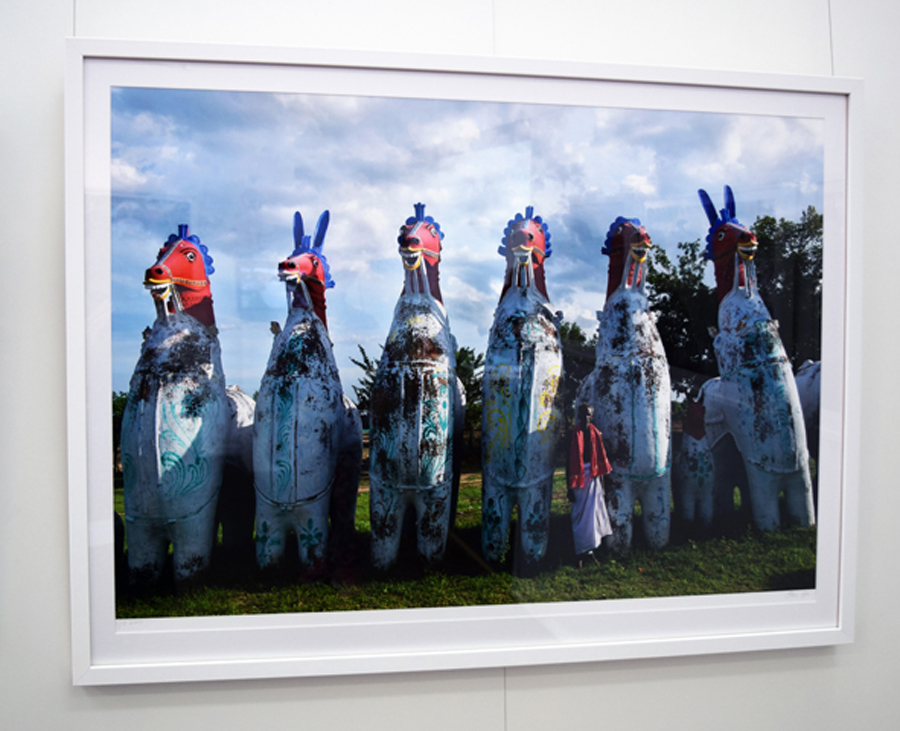 20. Clare Arni, Untitled (Horses in Place), 61 x 91 cm unframed, $1,190