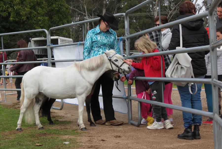Fine horse display 3.jpg