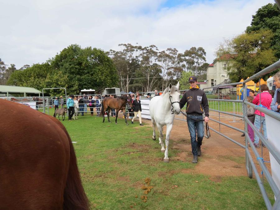 Peta Gallahers fine horse display.jpg