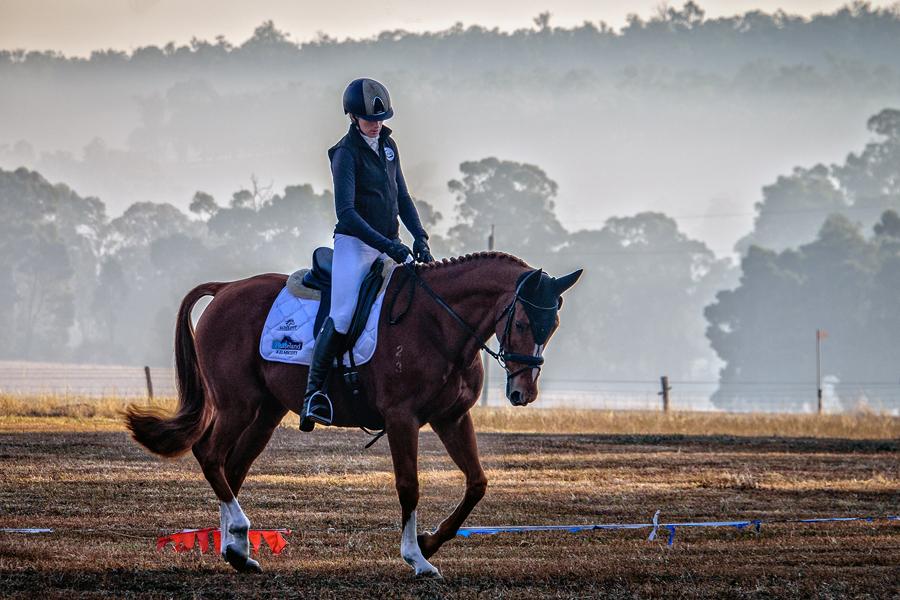 PB03 horses.jpg
