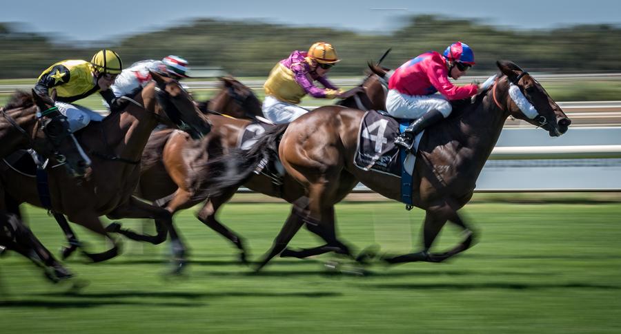 PB05 horses.jpg