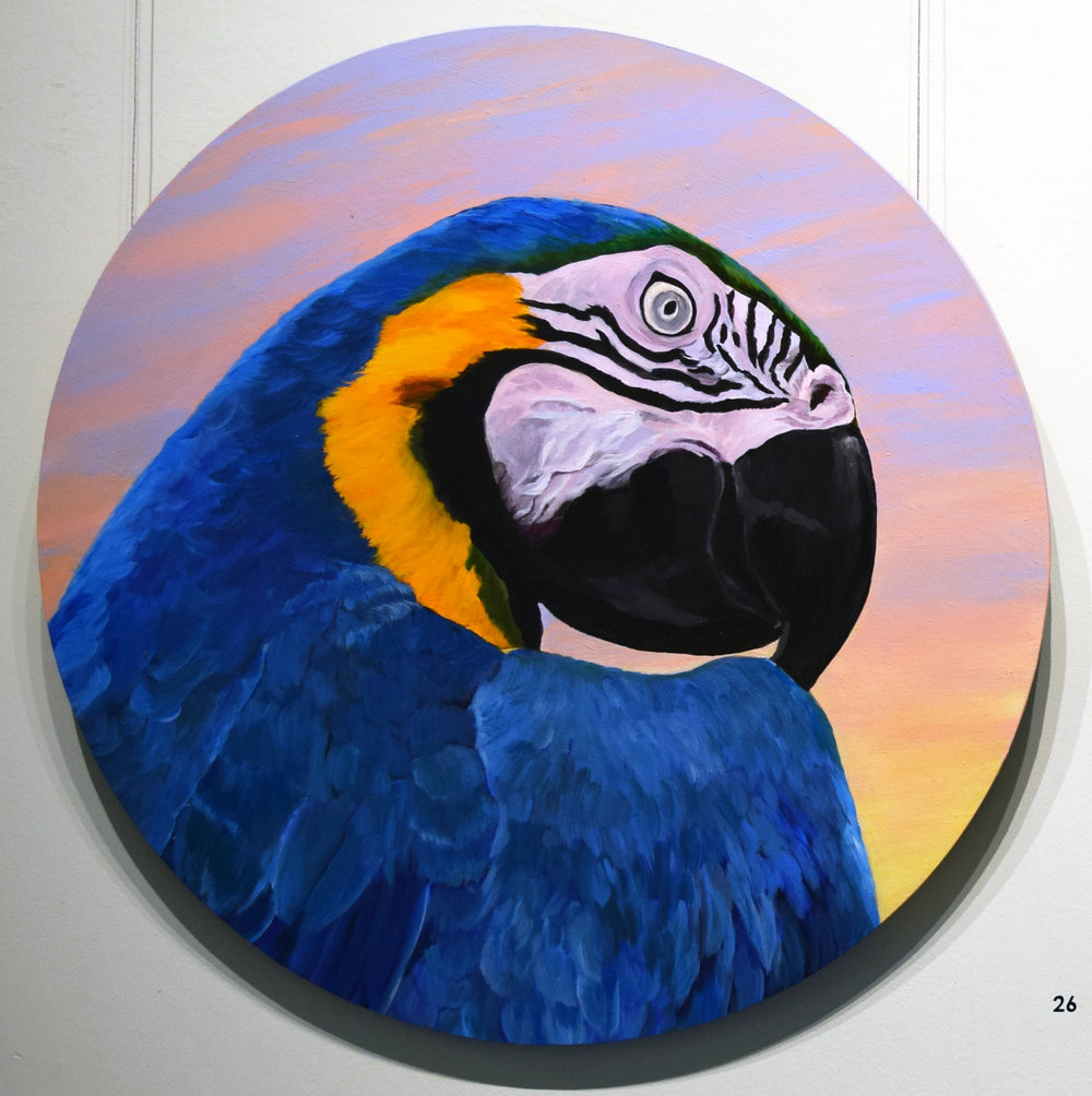 26. Joy Connell, Macaw, 2017, acrylic on board, 60 x 60 cm, $1,150 (for sale by commission).jpg