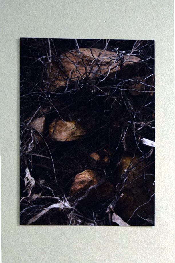 12 Bina Butcher, Nest, 2018, Digital Print, $110