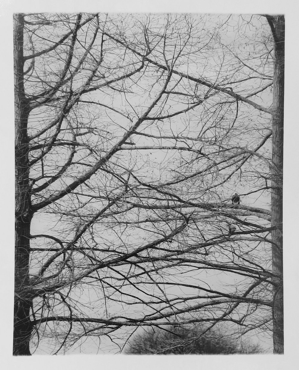 6. Richard Woldendorp, 'Branching Out, South West WA', BW85, taken and printed in 1967, Vintage Print