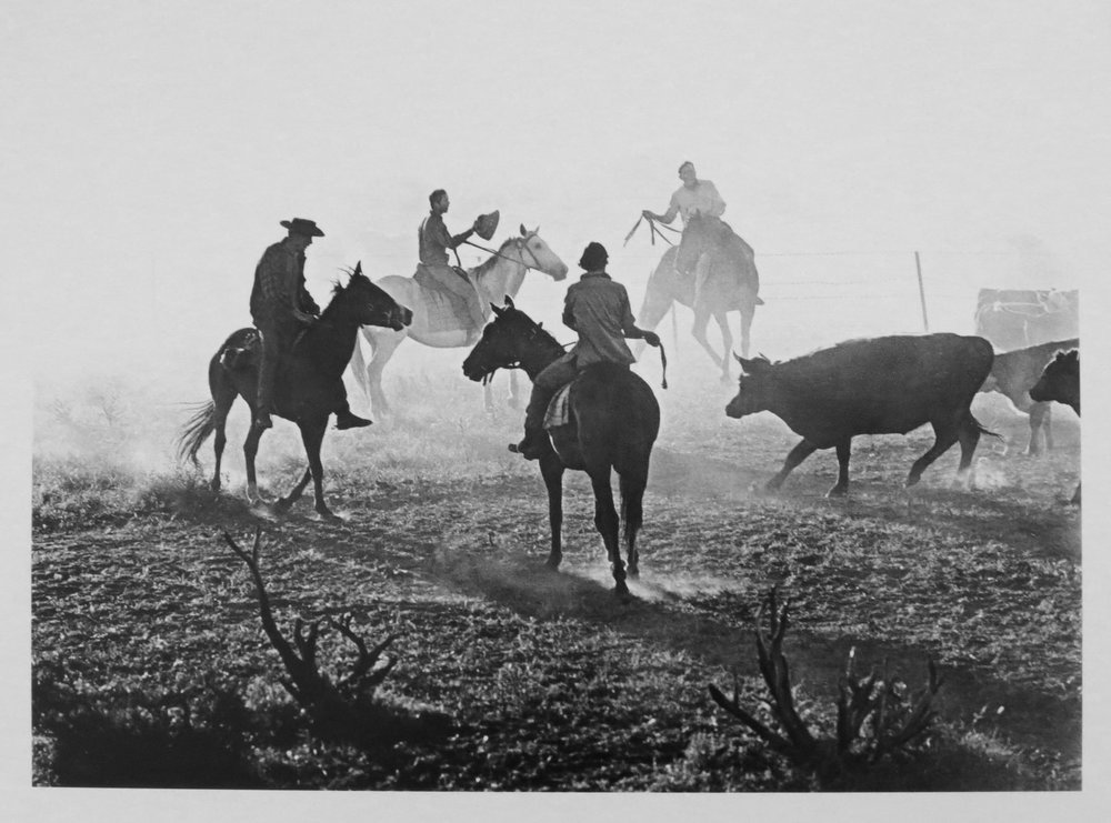 36. Richard Woldendorp, 'Cattle Muster, Mardathuna Station, Carnarvon WA', BW92, taken in 1968, printed in 2018