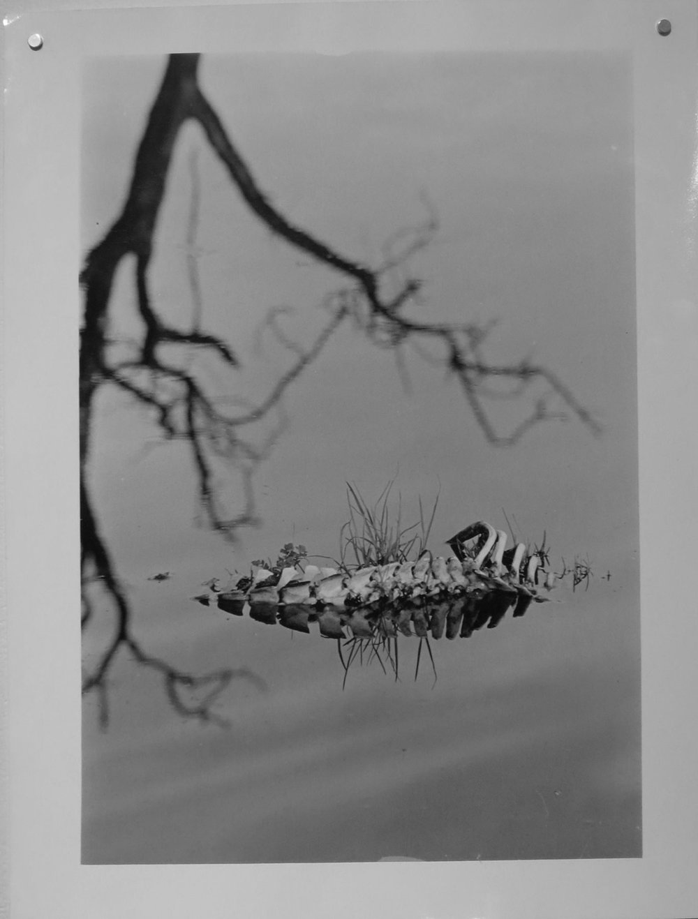 53. Richard Woldendorp, 'Flooded Paddock near Swan River, Perth WA', BW16, taken in 1959, printed in 2012