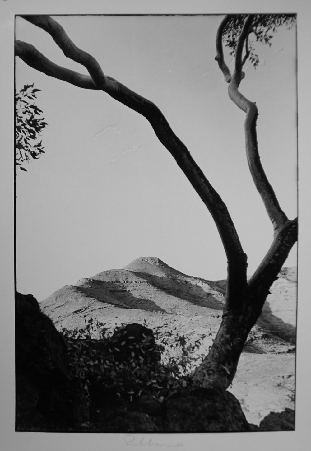 55. Richard Woldendorp, 'Hamersley Gorge with Snappy Gum, Pilbara WA', BW62, taken and printed in 1964, Vintage Print