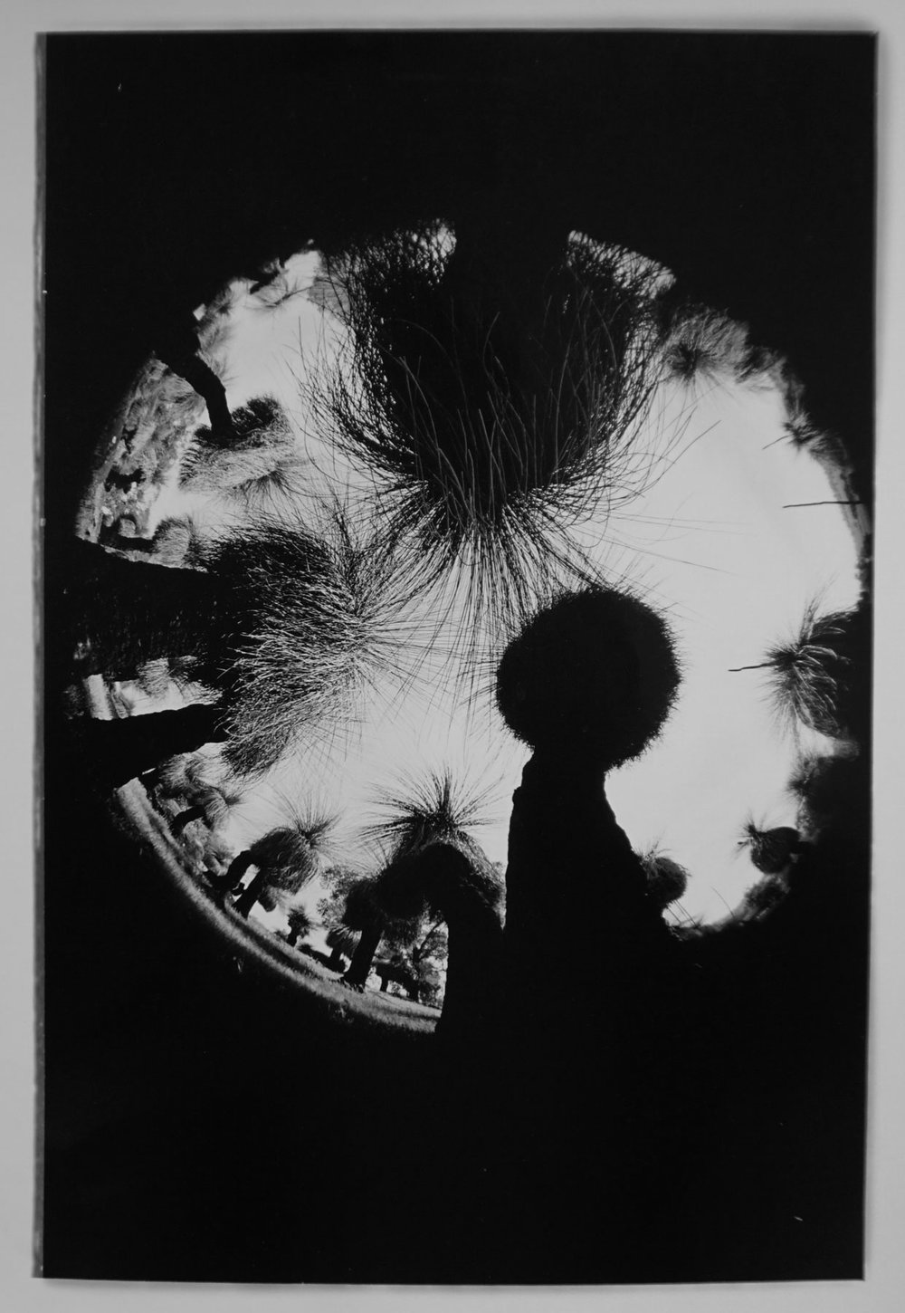 56. Richard Woldendorp, 'Zanthorrea, Bindoon WA', BW143a, taken in 1973, printed in 2012