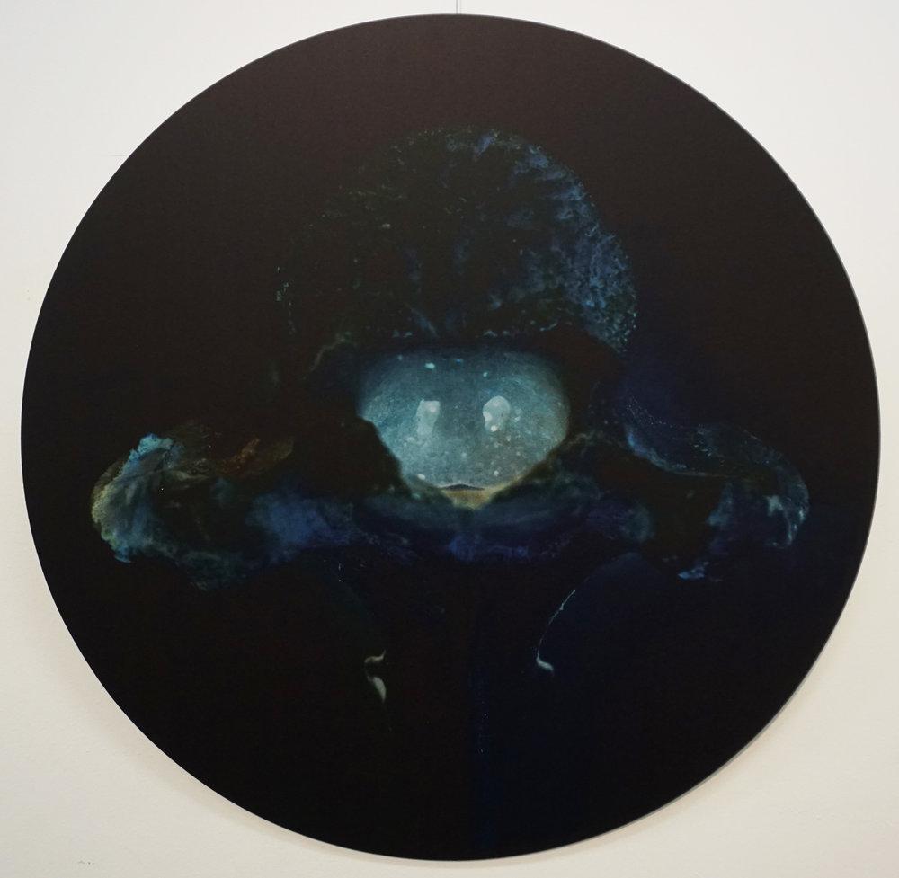 7. Stephanie Reisch, The Immortals #5, 2015, pigment on Aluminium, 60 cm diameter, $800