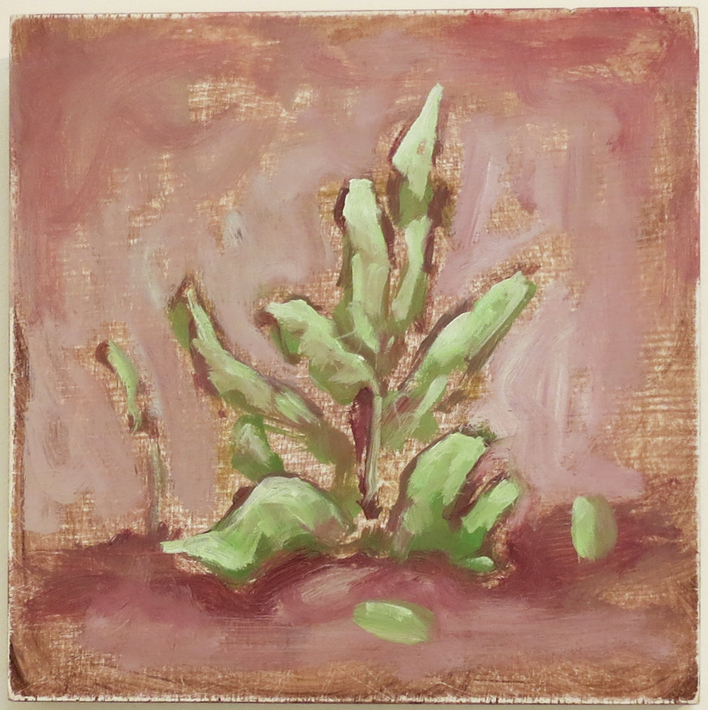 Harrison See, Mundaring Plant Study II, 2018, Oil on plywood, $170