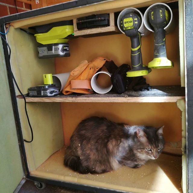 Tool cat #catsofinstagram #ryobi @ryobi