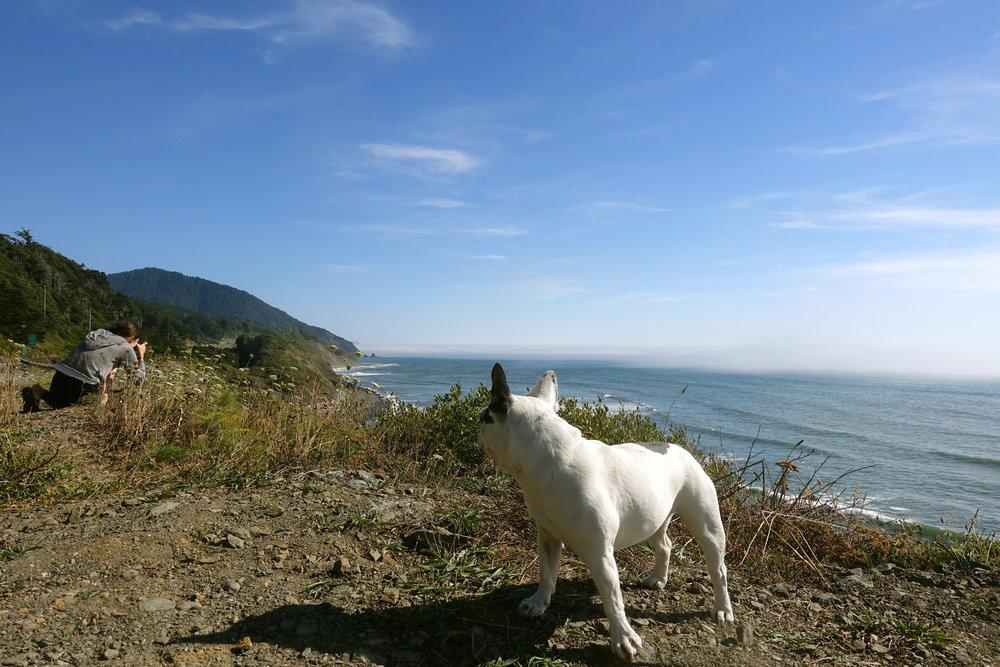 coastal viewstops