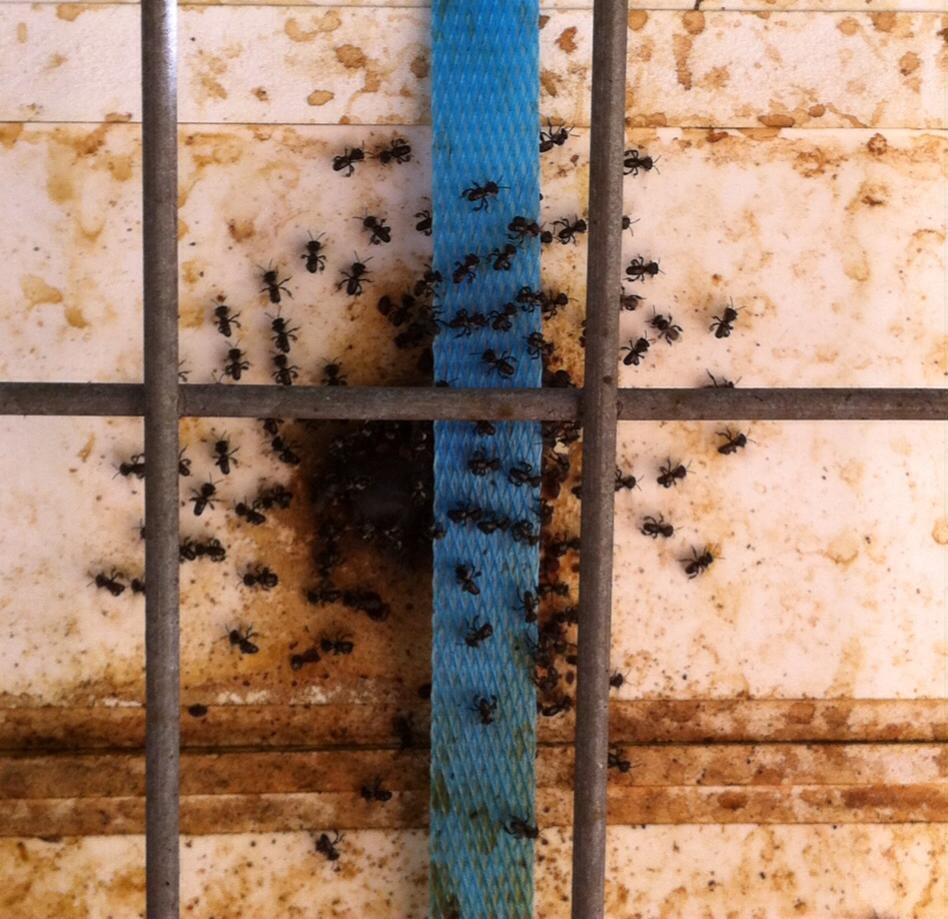 bees working hard.jpg