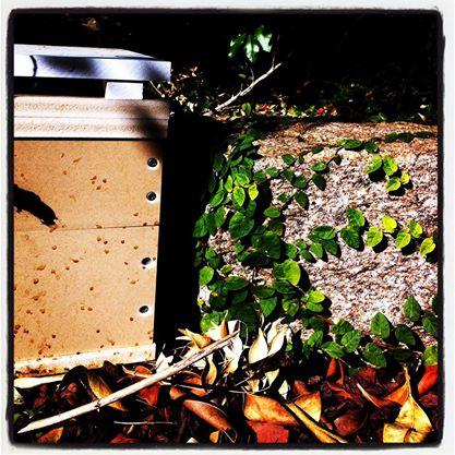 hive in the garden.jpg