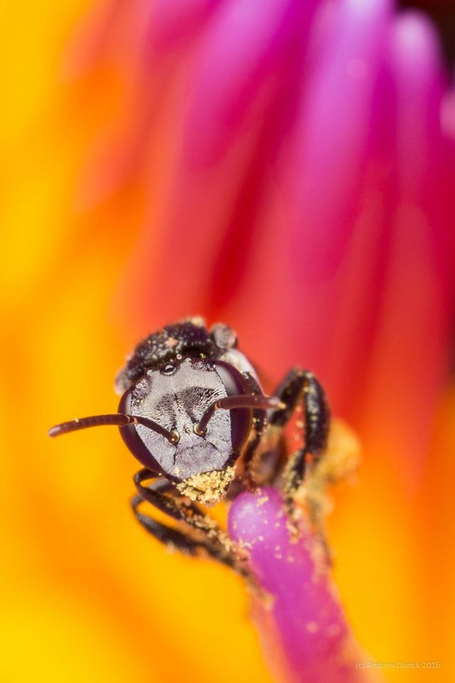 bee eyes.jpg