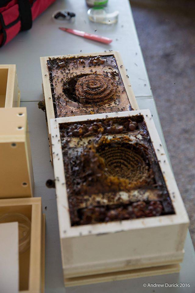 hive split.jpg
