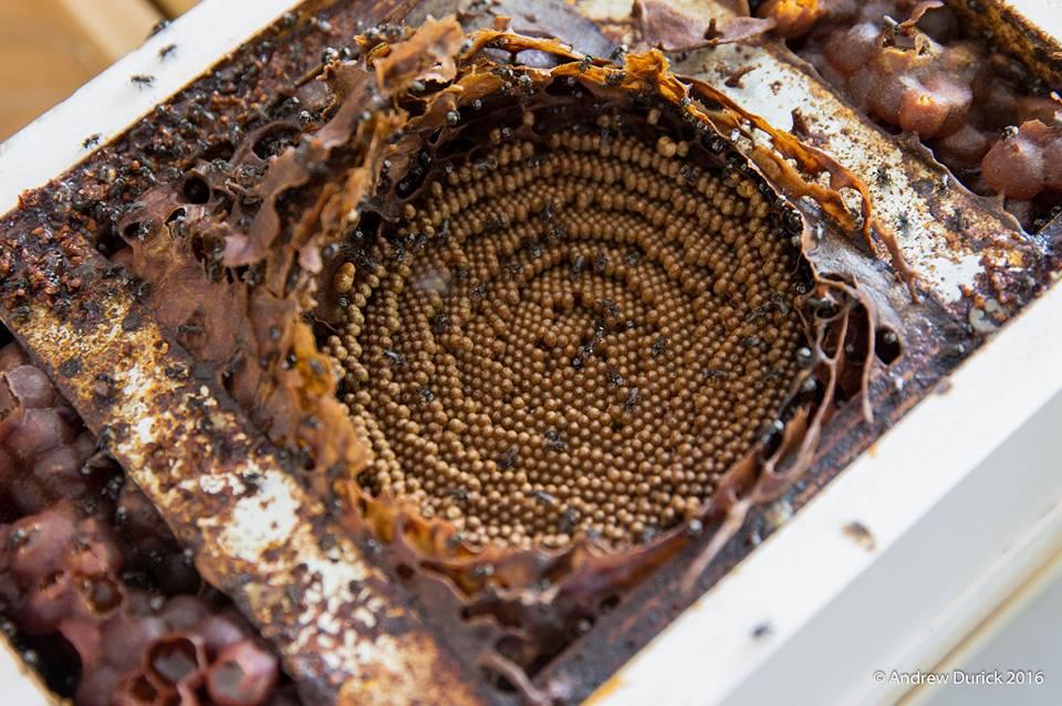 inside a hive.jpg