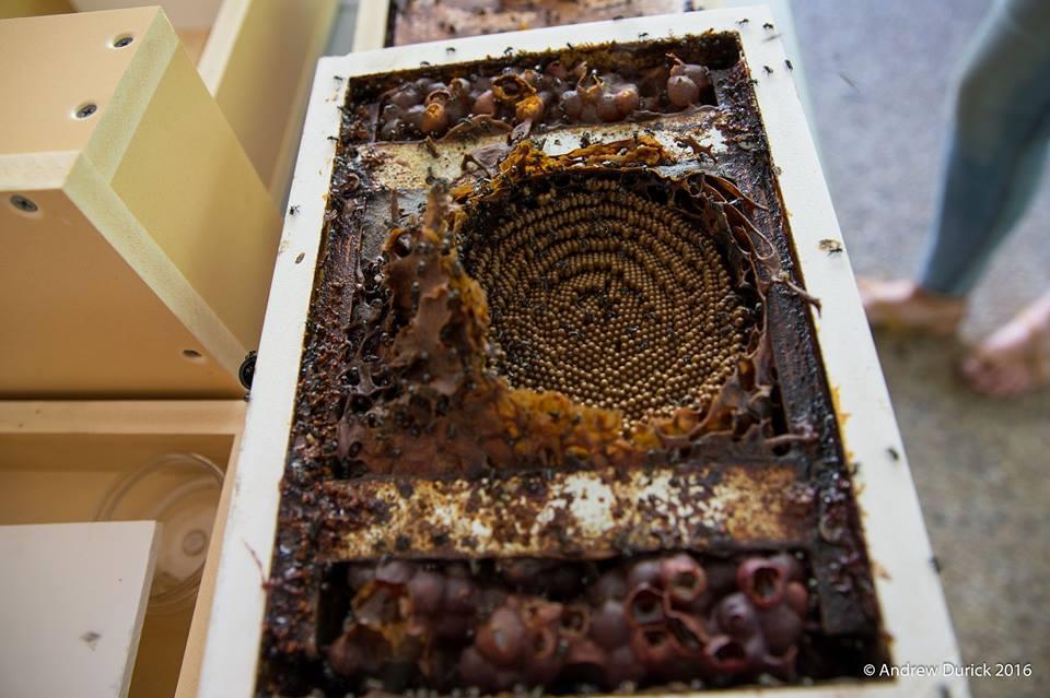 open hive.jpg