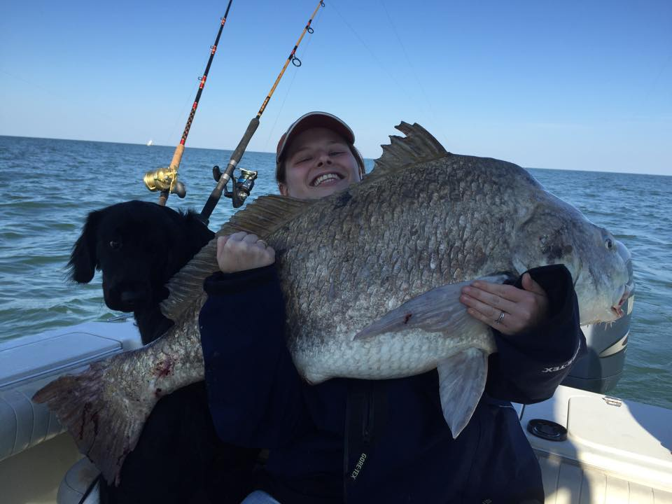 "47.5"" black drum caught by Megan Marshall, eastern shore on clam"