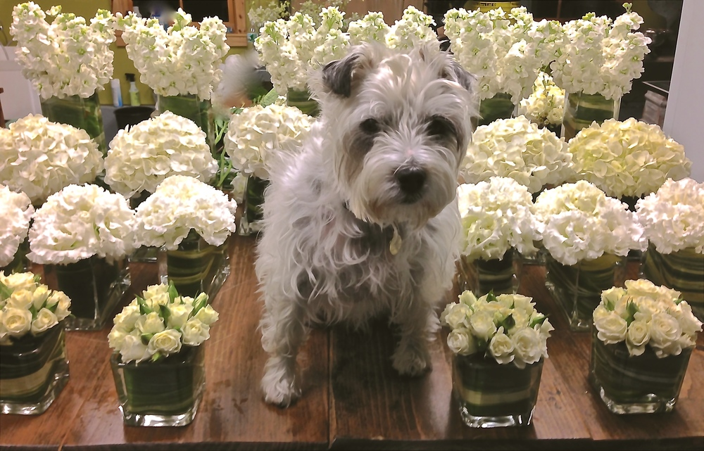 Thoroughly Modern Milly Loves A White Wedding!