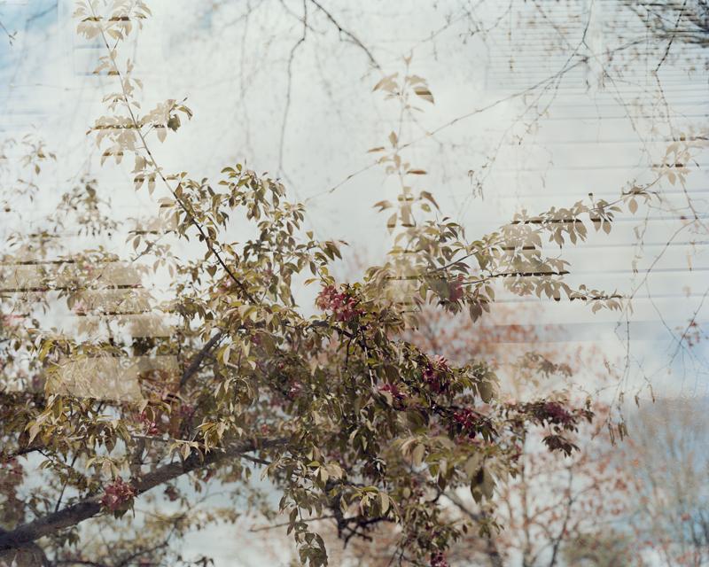 Natural World #1 (cherry blossom).jpg