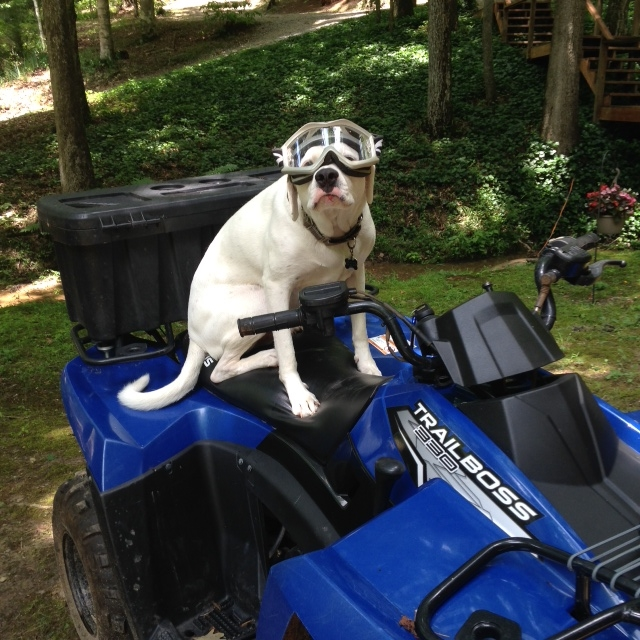 This is one of our dogs, Aden, on one of our ATV's. This has nothing to do with building a tiny house, but is a funny picture. He loves riding on the back. I tried to let him drive once, but we ended up at a biker bar, and got into a bit of trouble. That's a story for another day.